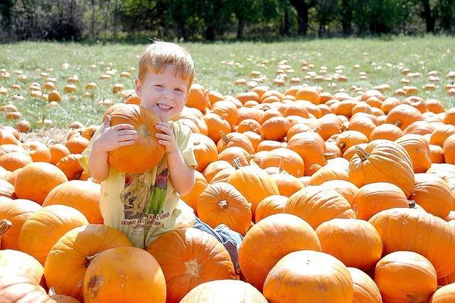 Coupon For Kc Pumpkin Patch Deals For Hilton Glasgow