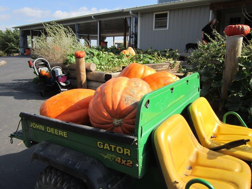 Walters Pumpkin Patch Corn Maze Kansas Haunted Houses